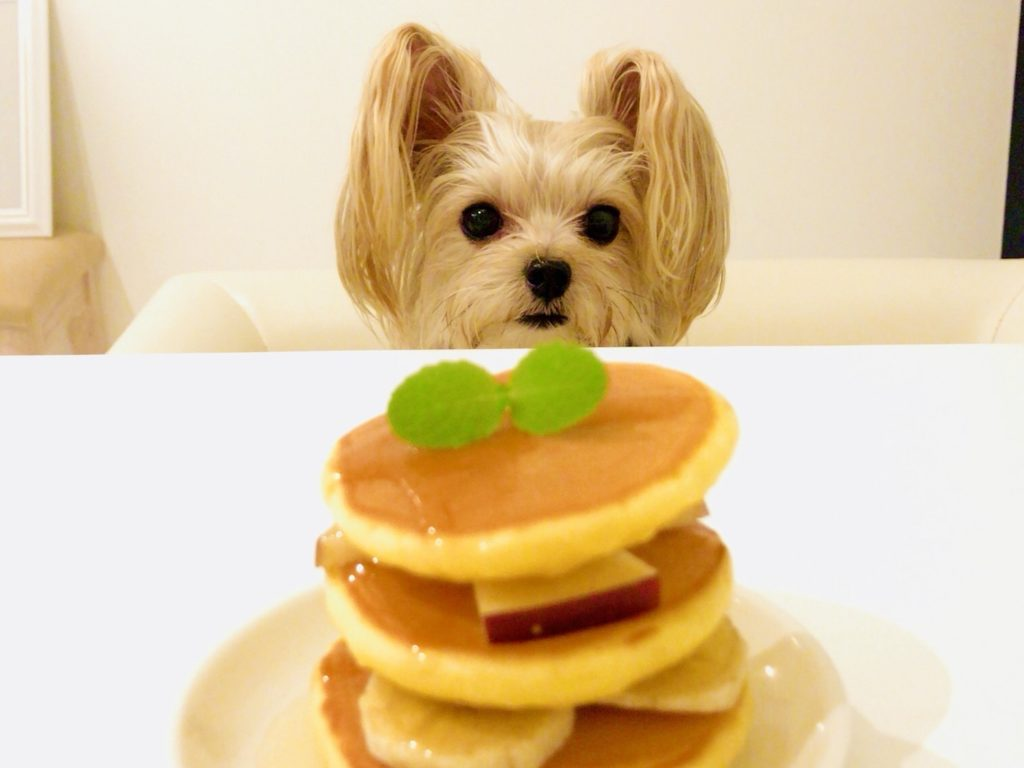 犬用ホットケーキ