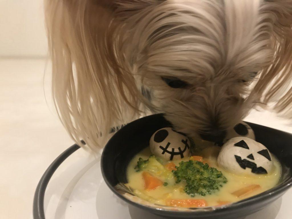 カボチャシチューを食べる犬