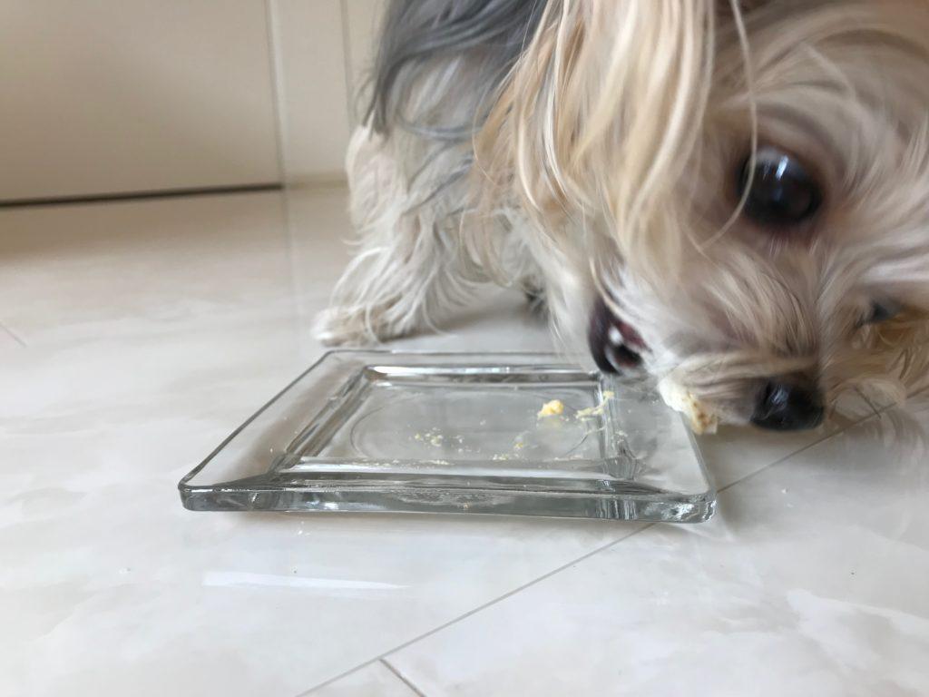 サンドイッチを食べきる犬
