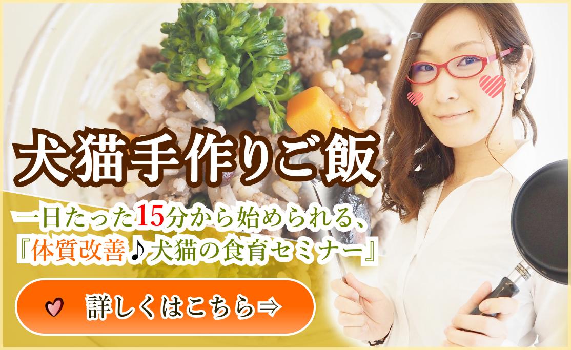 犬猫の手作りご飯セミナー