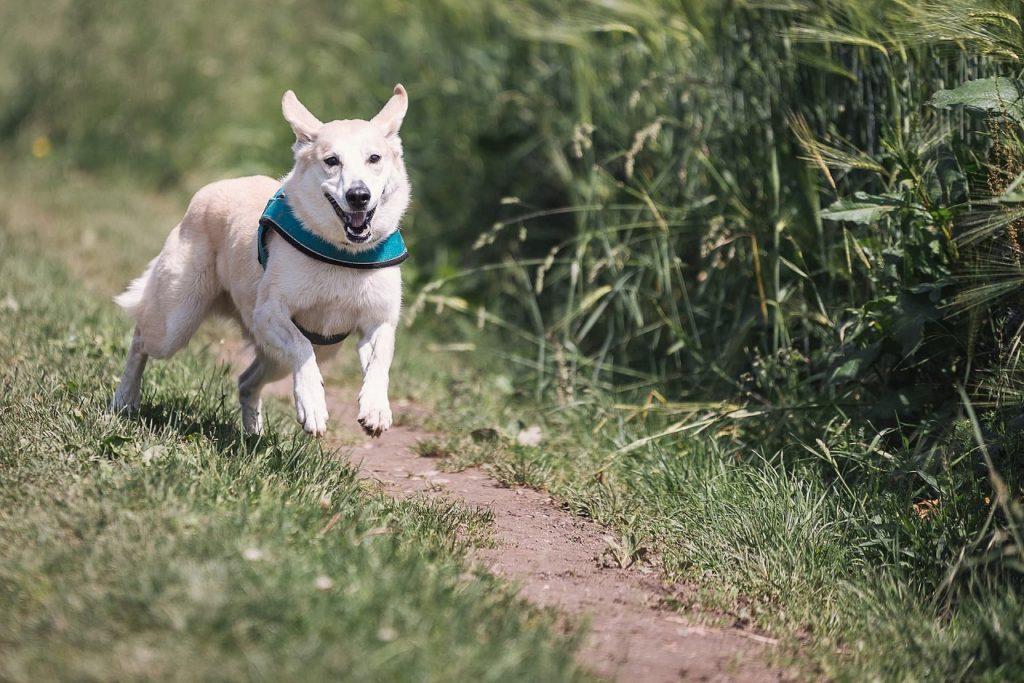 犬猫、栄養を吸収できる体づくり
