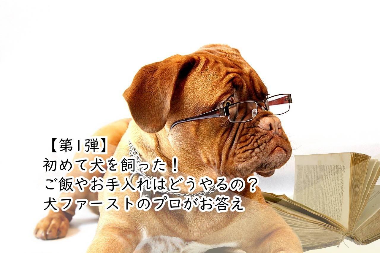 【第1弾】 初めて犬を飼った! ご飯やお手入れはどうやるの? 犬ファーストのプロがお答え