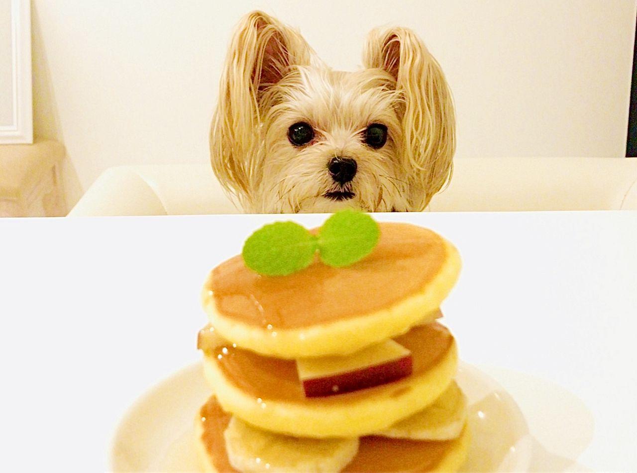 ペットのお食事イメージ9